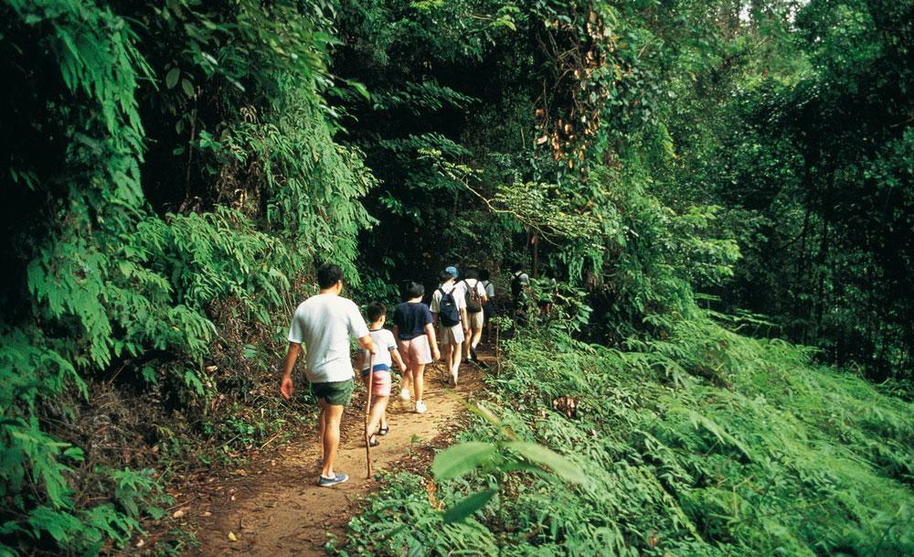 bukit-timah-nature-reserve-singapore 24