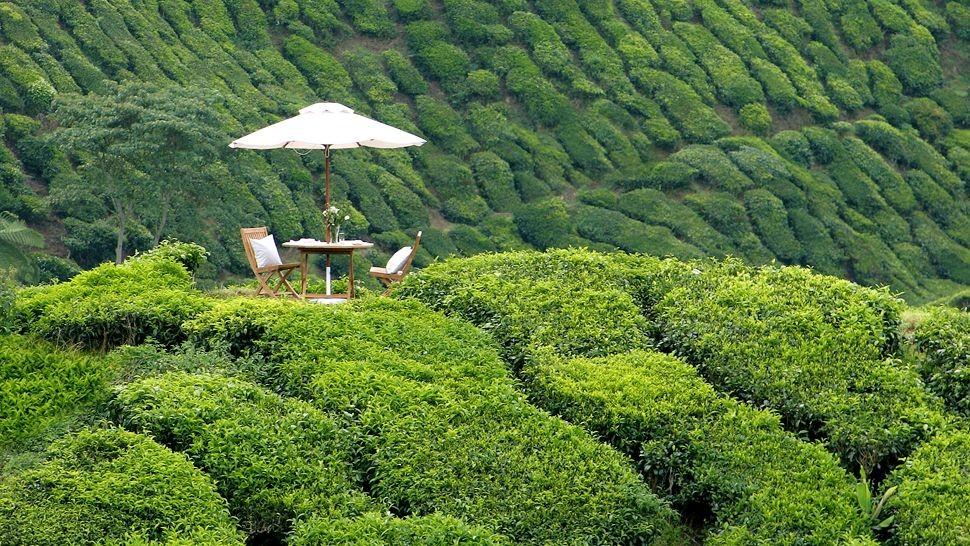 cameron highlands malaysia travel destinations 4