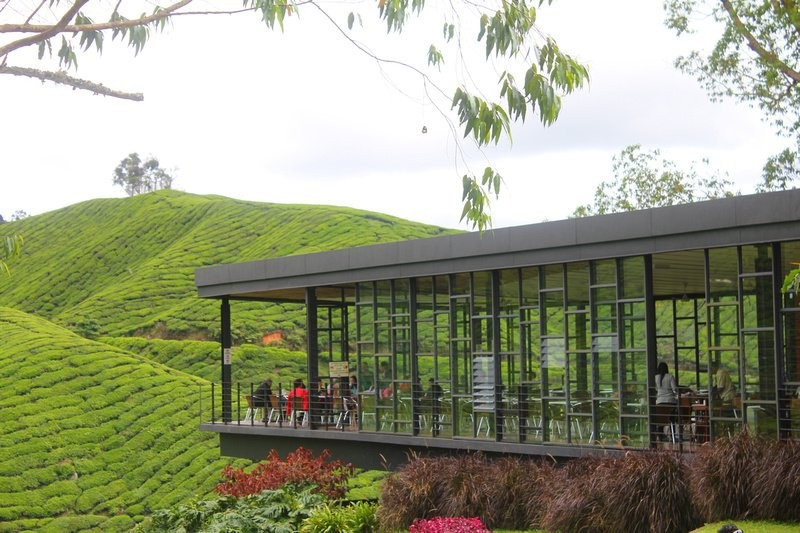 cameron highlands malaysia travel destinations 8