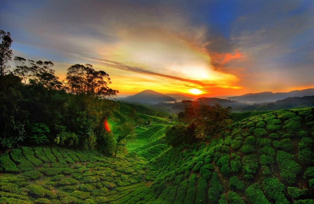 cameron highlands malaysia travel destinations
