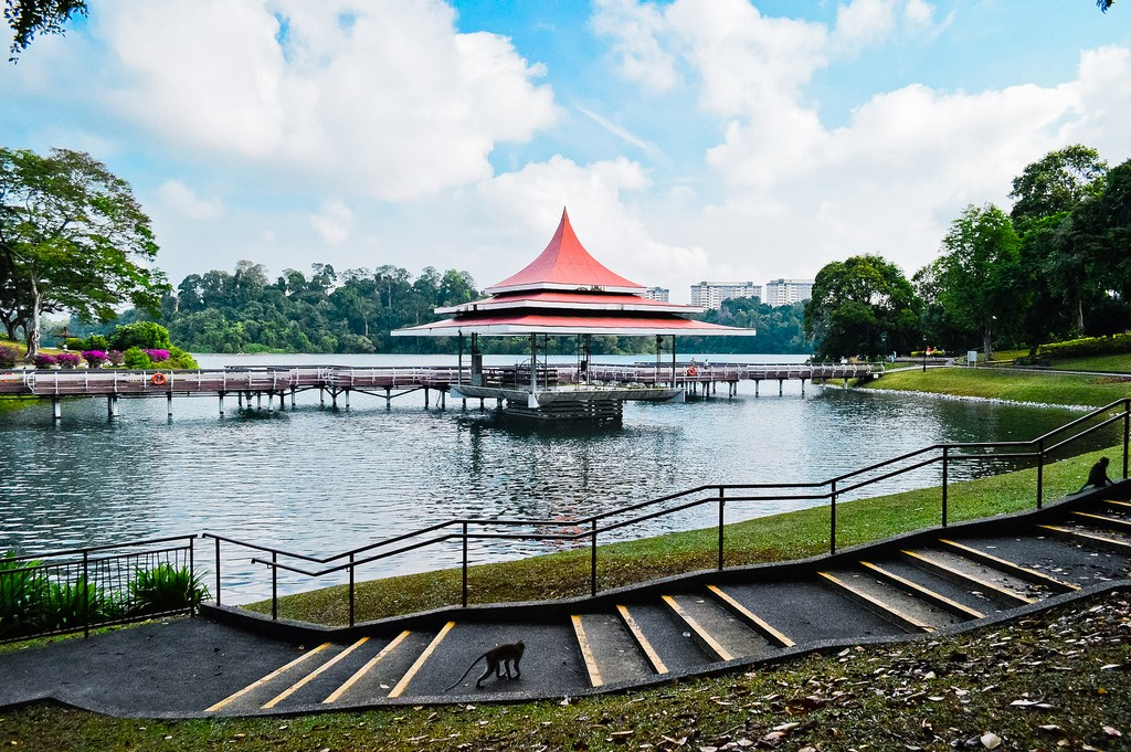 macRitchie Reservoir park singapore 13