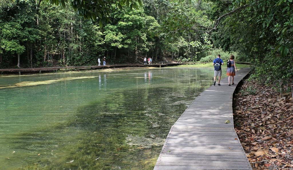 macRitchie Reservoir park singapore 15
