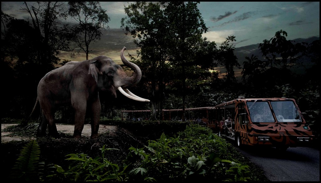 night safari singapore 9