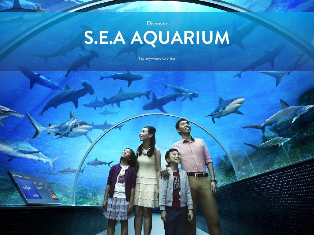sea-aquarium-singapore 15