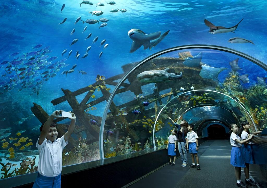 sea-aquarium-singapore 16