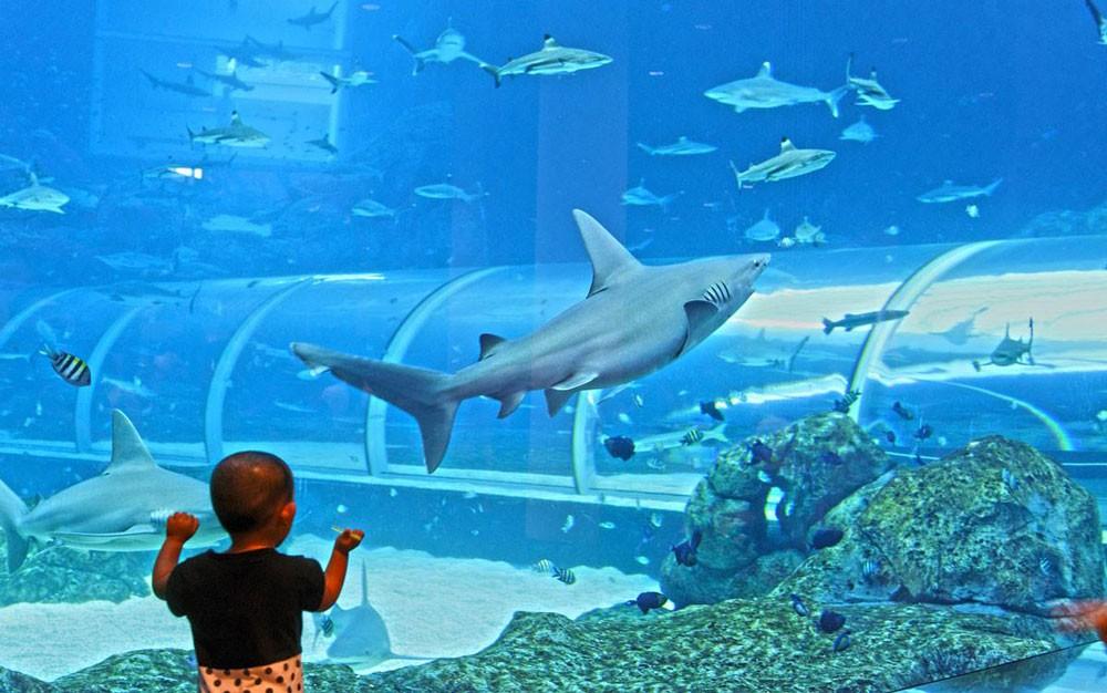 sea-aquarium-singapore 17