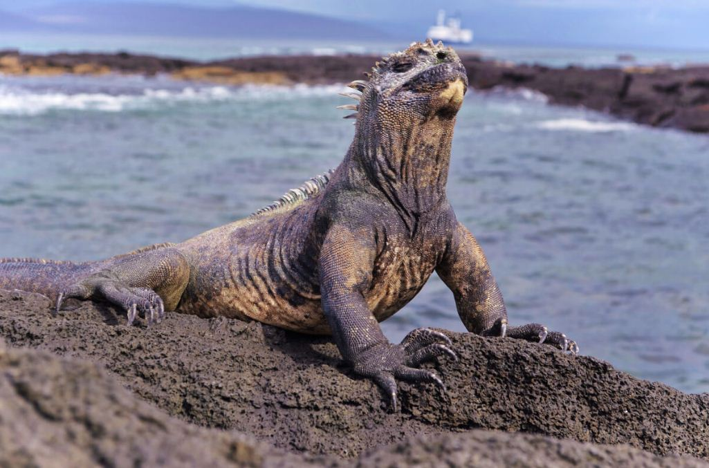 best time to go to galapagos island