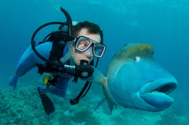 While diving in Australia