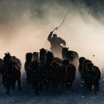 List of National Geographic photo contest 2016 winners