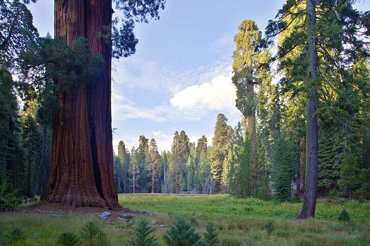 Round Meadow, Sequoia, US national park