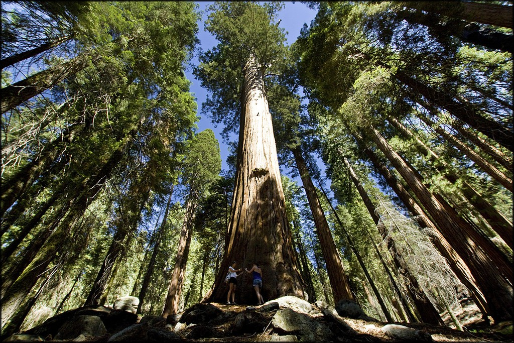 Sequoia, US national park