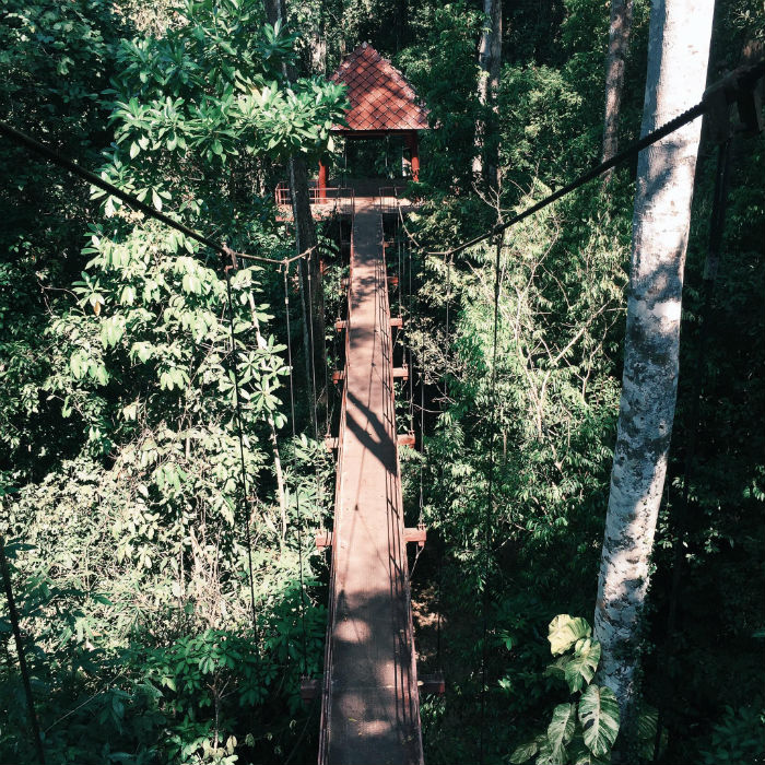 Suspension bridge. Source mytour.vn
