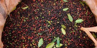 brazil, coffee origins
