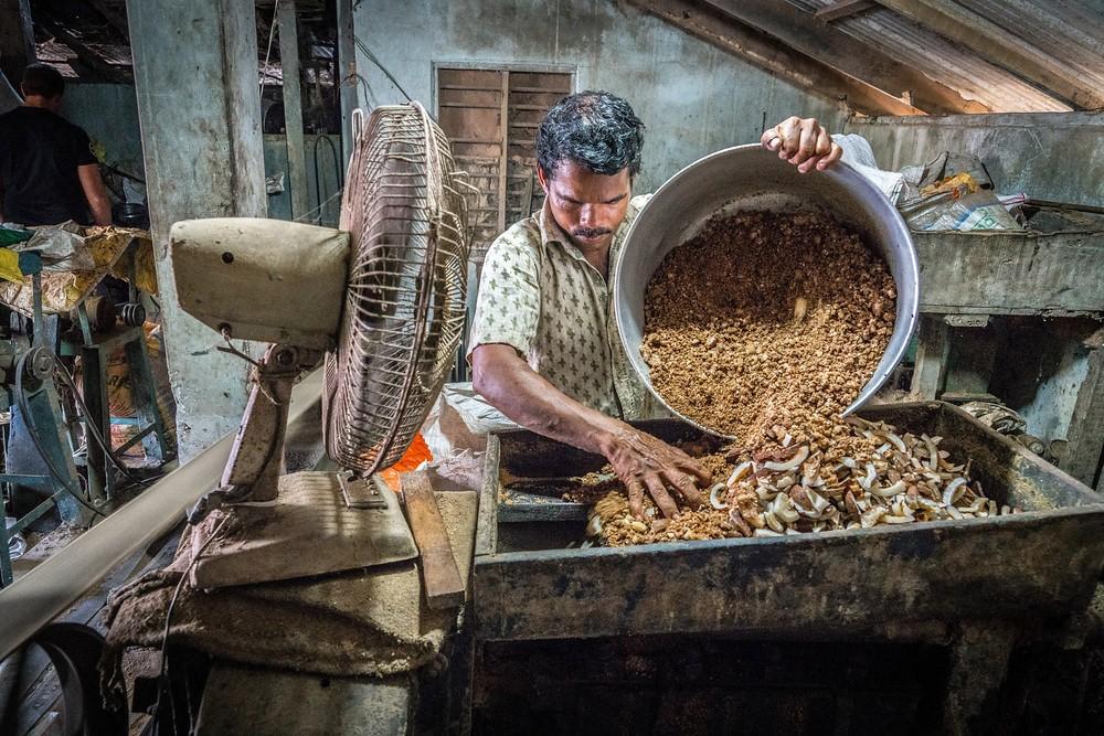 copra, everyday life, Kerala, India