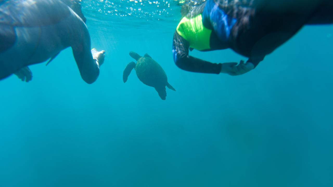 diving in galapagos islands things to know 3
