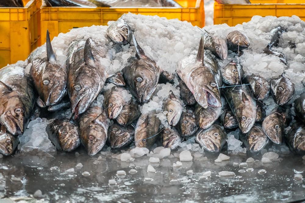 fish market, everyday life, Kerala, India