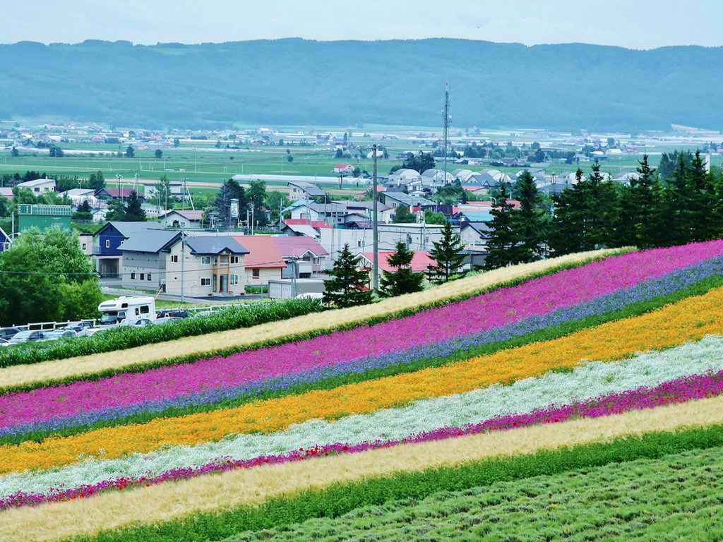 flowers-are-even-more-abundant-in-furano-at-the-farm-tomita-the-city-is-known-for-its-extensive-lavender-fields
