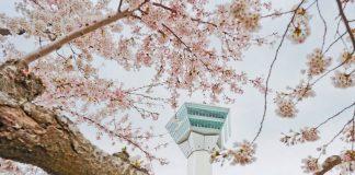 the-goryokaku-tower-also-provides-stunning-views-of-hakodate