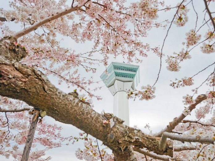the-goryokaku-tower-also-provides-stunning-views-of-hakodate