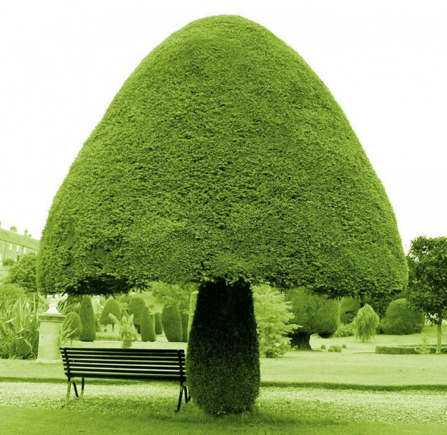 a mushroom shaped tree10 incredible photos of trees nature wildlife