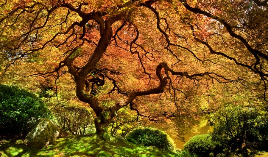 A Japanese maple 10 incredible photos of trees nature wildlife