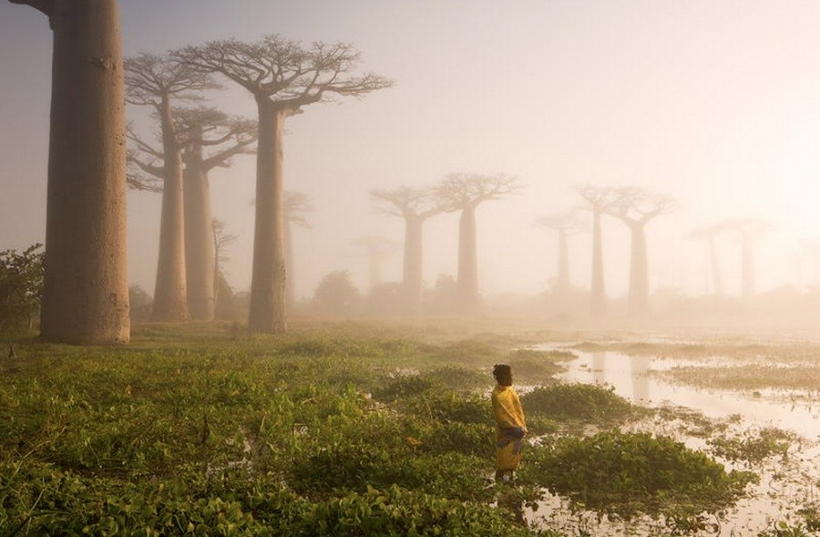 The baobab trees of Madagascar 10 incredible photos of trees nature wildlife