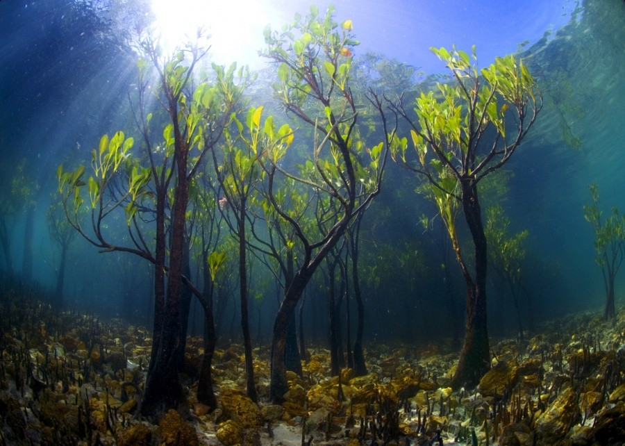 Young mango trees under water 10 incredible photos of trees nature wildlife