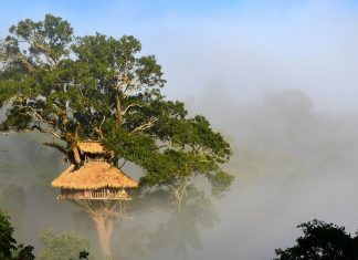 7 bokeo nature reserve ban houayxay bokeo province laos tourist attractions photos things to do getting there gibbon experience (17)