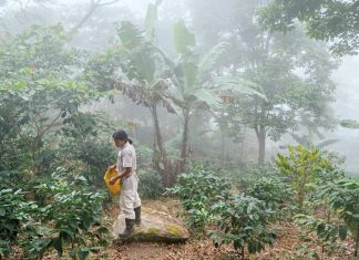 El Trompito, Colombia's coffee towns