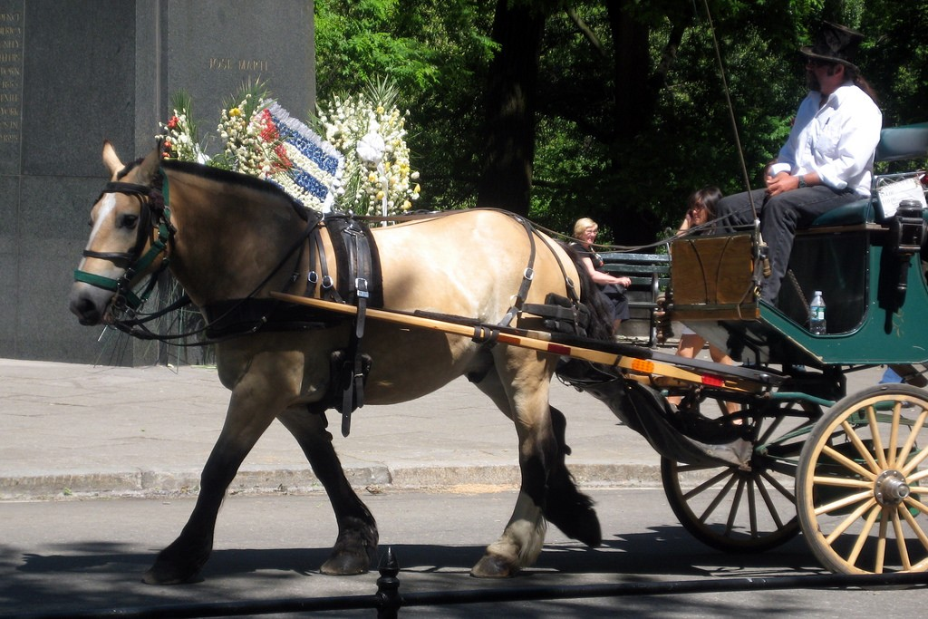 Vis-à-vis Carriage, central park, new york, us