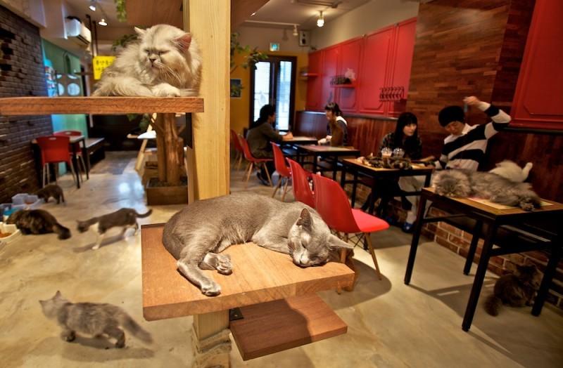 cat cafes, tokyo, japan