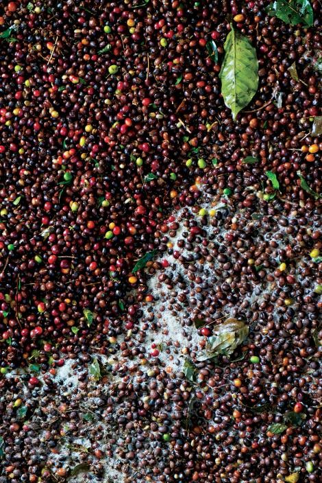 organic fruit, Colombia's coffee towns