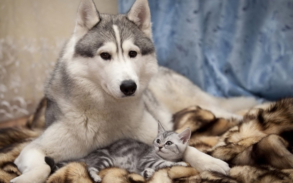 sweet_dog_and_cat-animal-protection-netherlands