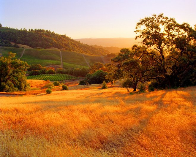 wed field in autumn sonoma califotnia america destinations