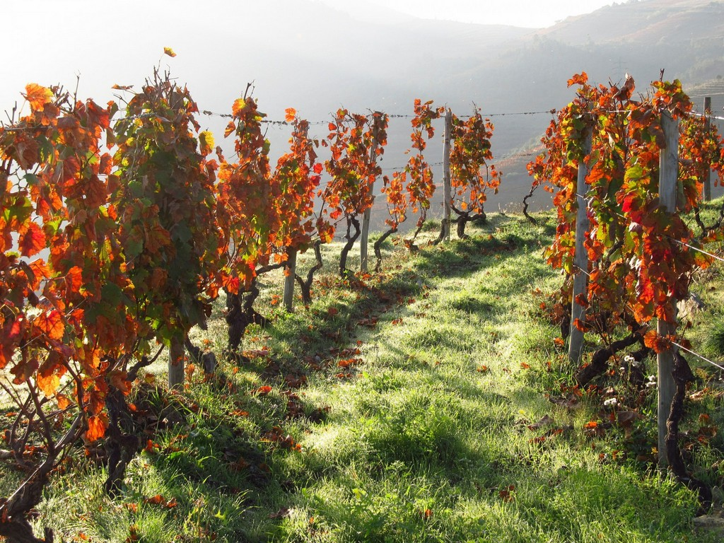 Minho-Portugal-green garden-autumn-attractions in europe