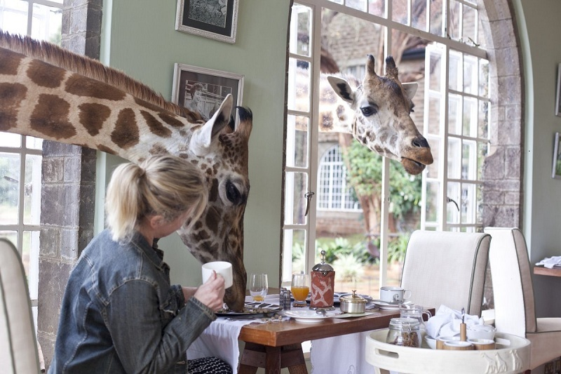 giraffes-manor-between-nairobi-and-the-ngong-hills-nature-reserve