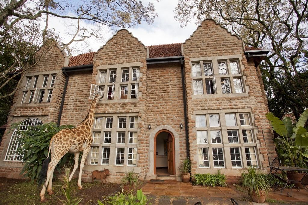 wanderlust-tips-enjoy-breakfast-with-giraffes-in-Kenya3