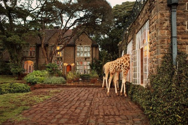 wanderlust_tips_enjoy-breakfast-with giraffes-in-Kenya4 (1)