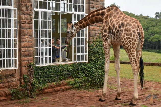 wanderlust_tips_enjoy-breakfast-with giraffes-in-Kenya4 (10)