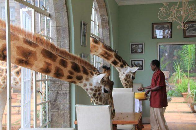 wanderlust_tips_enjoy-breakfast-with giraffes-in-Kenya4 (11)