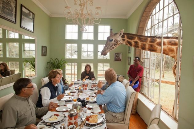 wanderlust_tips_enjoy-breakfast-with giraffes-in-Kenya4 (12)