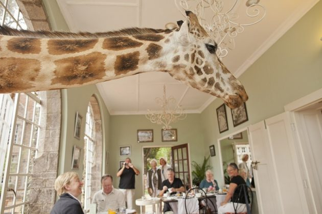 wanderlust_tips_enjoy-breakfast-with giraffes-in-Kenya4 (13)