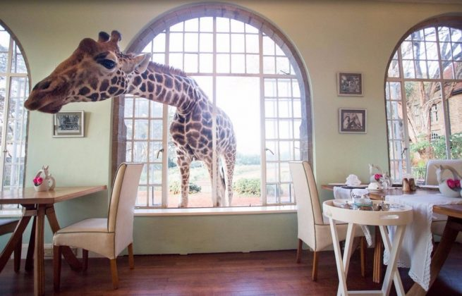 wanderlust_tips_enjoy-breakfast-with giraffes-in-Kenya4 (14)