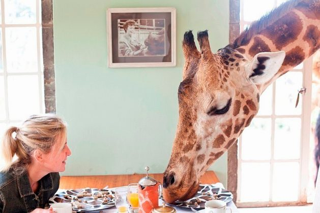 wanderlust_tips_enjoy-breakfast-with giraffes-in-Kenya4 (15)