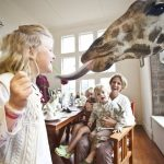 Enjoy interesting breakfast with giraffes at Giraffe Manor in Kenya