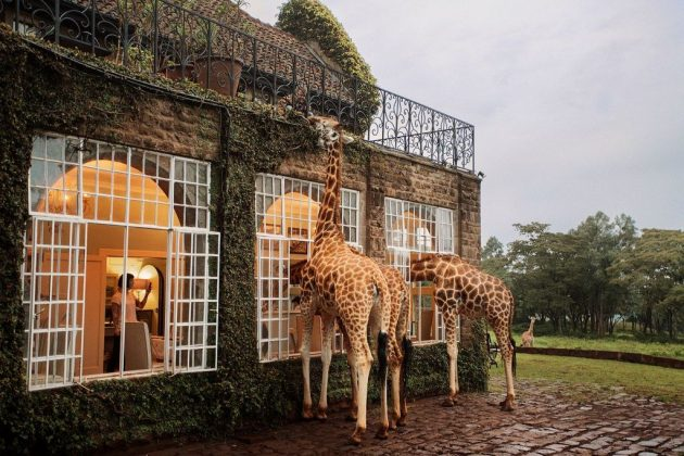 wanderlust_tips_enjoy-breakfast-with giraffes-in-Kenya4 (2)