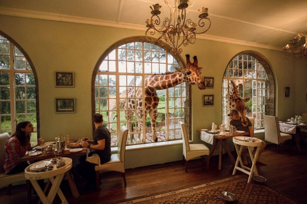 wanderlust_tips_enjoy-breakfast-with giraffes-in-Kenya4 (3)