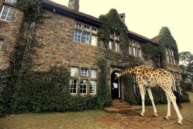 wanderlust_tips_enjoy-breakfast-with giraffes-in-Kenya4 (5)