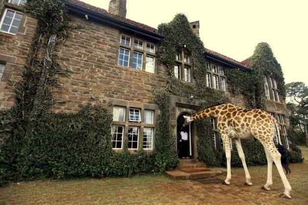 wanderlust_tips_enjoy-breakfast-with giraffes-in-Kenya4 (5)