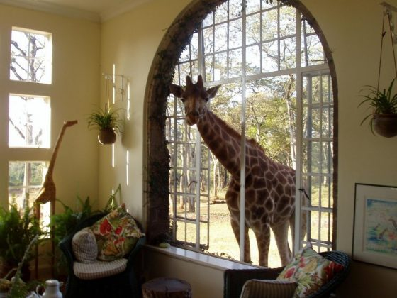 wanderlust_tips_enjoy-breakfast-with giraffes-in-Kenya4 (6)